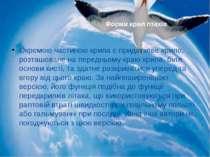 Окремою частиною крила є придаткове крило, розташоване на передньому краю кри...