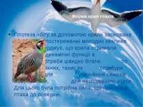 Гіпотеза «бігу за допомогою крил» заснована на спостереженні молодих кекликів...
