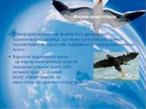 Планформа крила – це форма його двовимірної горизонтальної проекції, що може ...