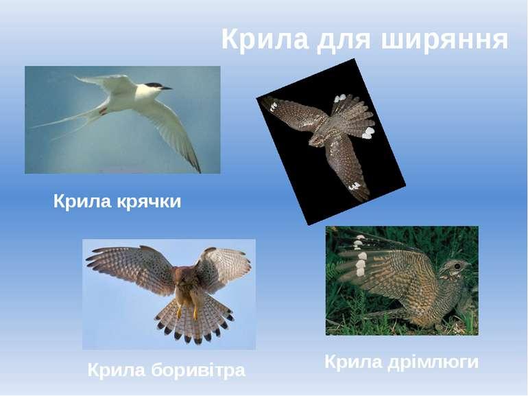 Крила для ширяння Крила боривітра Крила дрімлюги Крила крячки