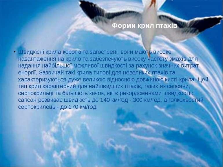 Швидкісні крила короткі та загострені, вони мають високе навантаження на крил...