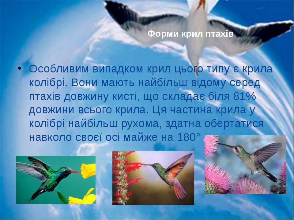 Особливим випадком крил цього типу є крила колібрі. Вони мають найбільш відом...