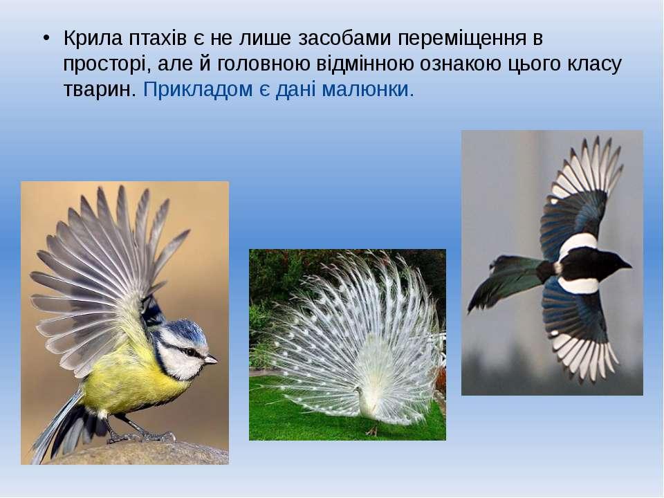 Крила птахів є не лише засобами переміщення в просторі, але й головною відмін...