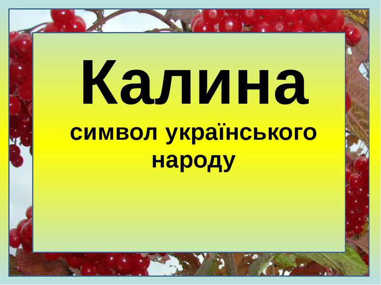 Калина символ українського народу