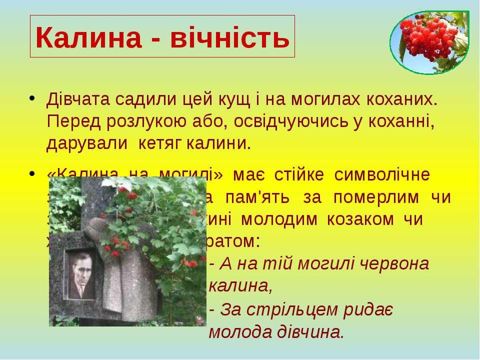 Дівчата садили цей кущ і на могилах коханих. Перед розлукою або, освідчуючись...
