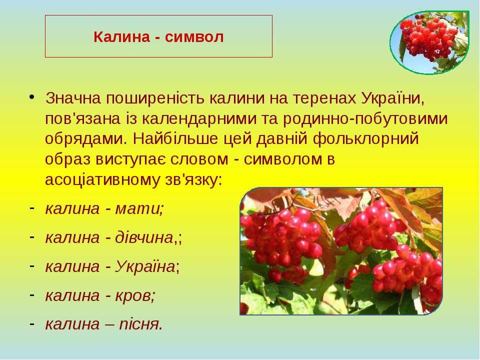 Значна поширеність калини на теренах України, пов'язана із календарними та ро...