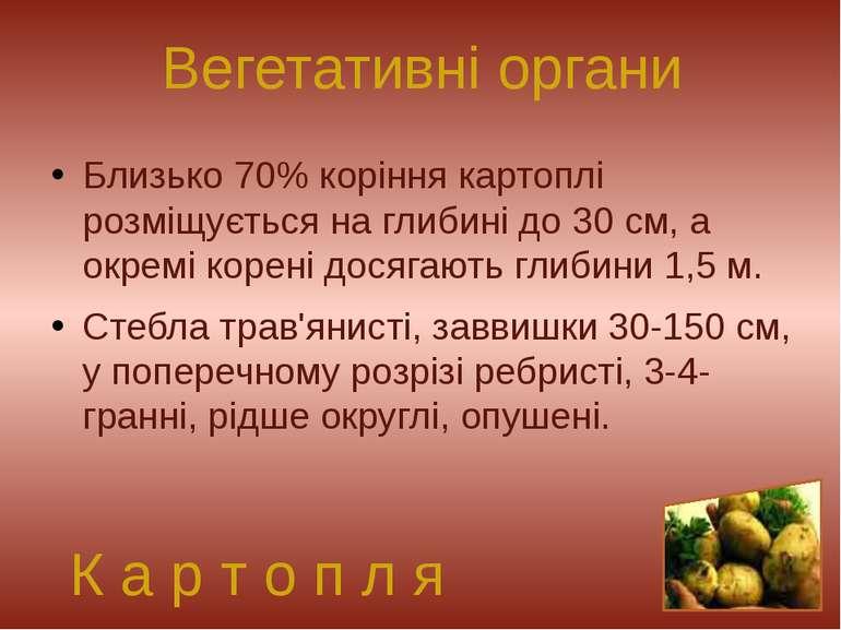 Близько 70% коріння картоплі розміщується на глибині до 30 см, а окремі корен...