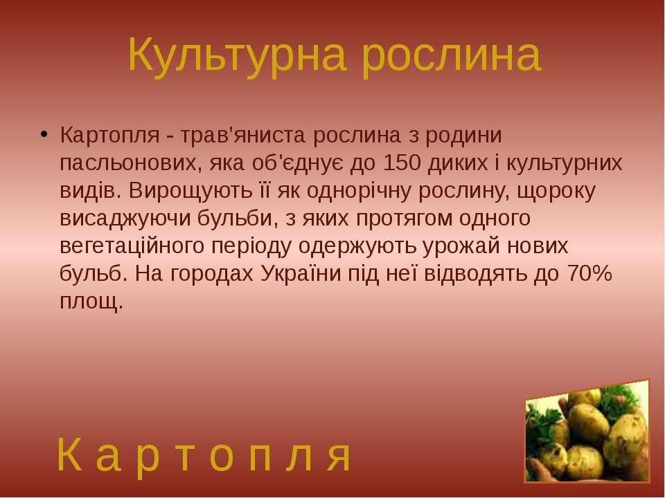 Культурна рослина Картопля- трав'яниста рослина з родини пасльонових, яка об...