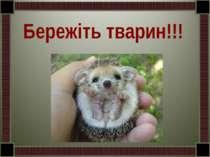 Бережіть тварин!!!