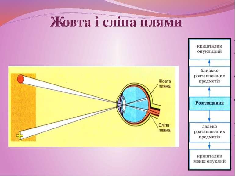 Жовта і сліпа плями