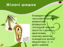 Жіночі шишки Всередині кожного насіннєвого зачатка із макроспори формується г...