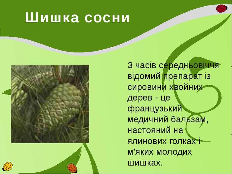 Шишка сосни З часів середньовіччя відомий препарат із сировини хвойних дерев ...