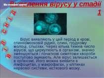 Вірус виявляють у цей період в крові, спинномозковій рідині, слині, грудному ...