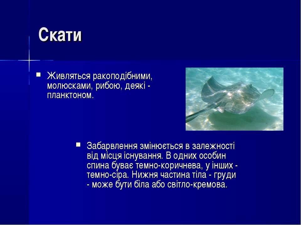 Скати Живляться ракоподібними, молюсками, рибою, деякі- планктоном. Забарвле...