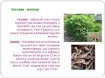 Кассава - африканська назва маніоку (ця назва походить з Бразилії, де так цю ...