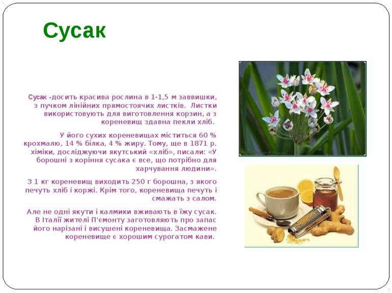 Сусак -досить красива рослина в 1-1,5 м заввишки, з пучком лінійних прямостоя...