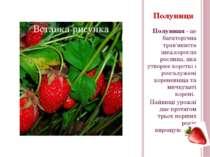 Полуниця- це багаторічна трав'яниста низькоросла рослина, яка утворює коротк...