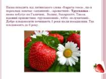 Назва походить від латинського слова «fragaria vesca», що в перекладі означає...