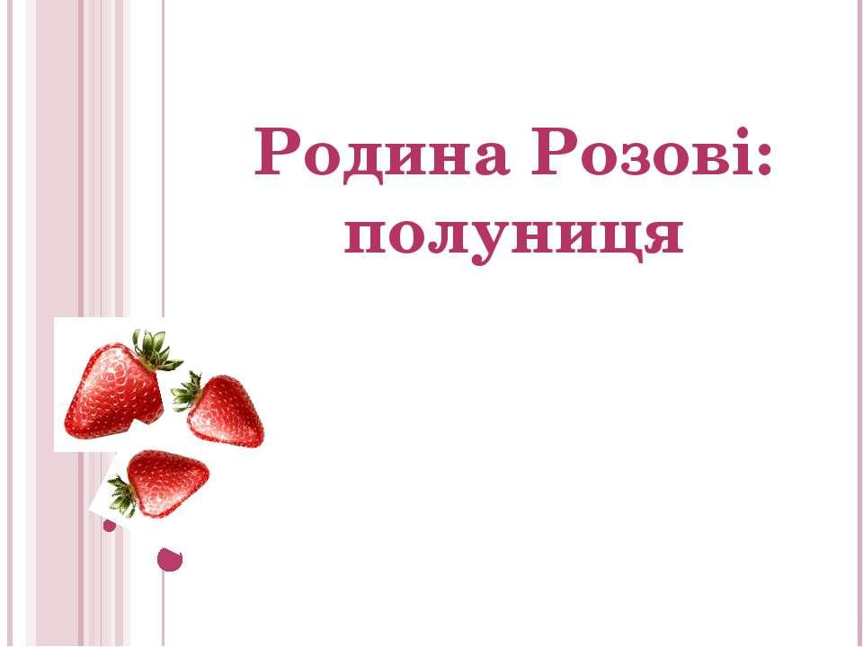 Родина Розові: полуниця