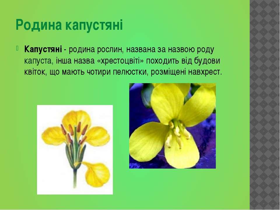 Родина капустяні Капустяні - родина рослин, названа за назвою роду капуста, і...