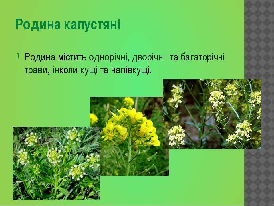 Родина містить однорічні, дворічні та багаторічні трави, інколи кущі та напів...