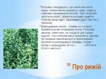 Ботаніки стверджують, що рижій має вісім видів. Собою являє однорічну траву, ...