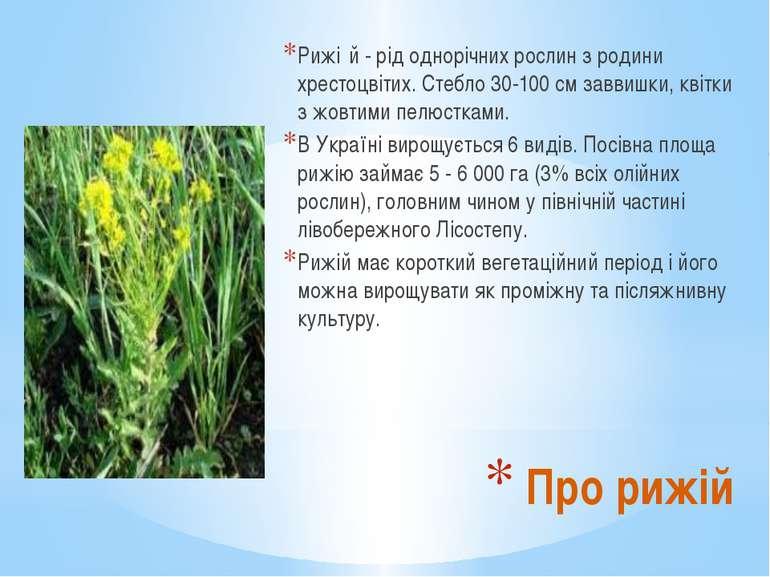 Рижі й - рід однорічних рослин з родини хрестоцвітих. Стебло 30-100 см заввиш...