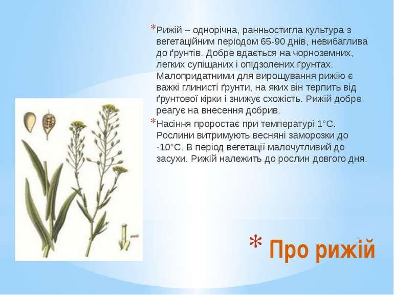 Рижій – однорічна, ранньостигла культура з вегетаційним періодом 65-90 днів, ...