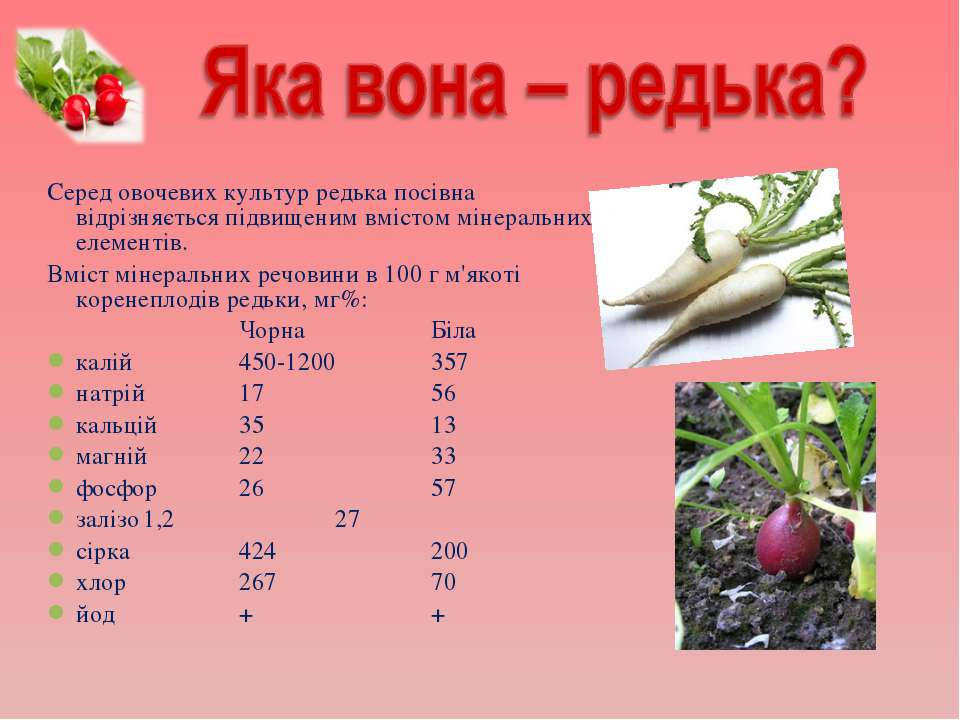 Серед овочевих культур редька посівна відрізняється підвищеним вмістом мінера...