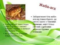 У молодих жаб темна гладка шкіра з ще більш темними плямами і смугами, а прив...