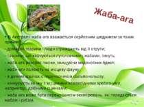 В Австралії жаба-ага вважається серйозним шкідником за таких причин: - домашн...