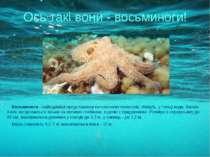 Восьминоги- найвідоміші представники головоногих молюсків. Живуть у товщі во...