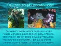 Восьминіг - хижак, полює сидячи в засідці. Поїдає молюсків, ракоподібних, риб...