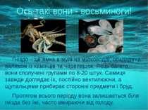 Гніздо – це ямка в мулі на мілководді, обкладена валиком із камінців та череп...