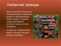 Ще на початку XX століття сорти поліантових троянд, отриманих в результаті сх...
