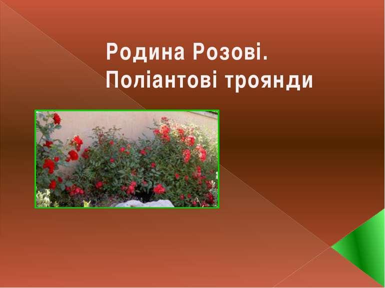 Родина Розові. Поліантові троянди