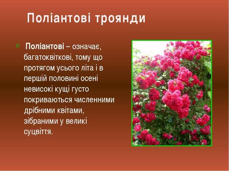 Поліантові – означає, багатоквіткові, тому що протягом усього літа і в першій...