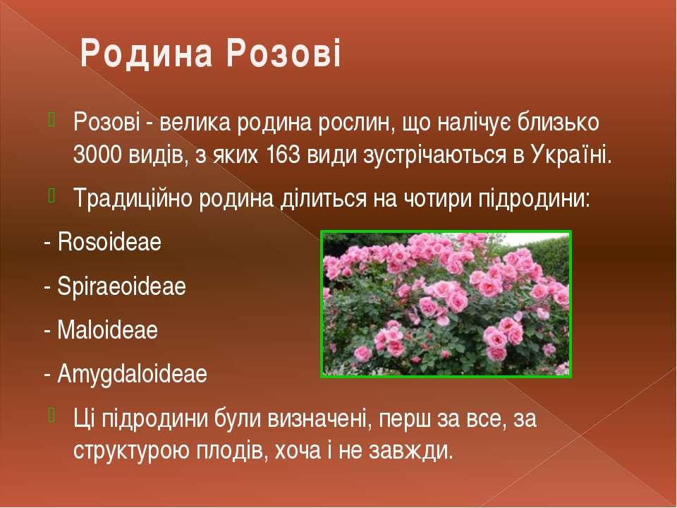 Розові - велика родина рослин, що налічує близько 3000 видів, з яких 163 види...