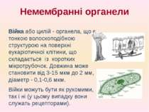 Війка або цилій - органела, що є тонкою волоскоподібною структурою на поверхн...