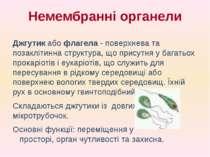 Джгутик або флагела - поверхнева та позаклітинна структура, що присутня у баг...