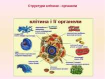 Структури клітини - органели