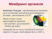 Комплекс Ґольджі - одномембранна органела, що в основному призначена для виве...