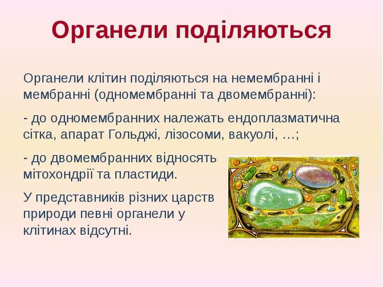 Органели клітин поділяються на немембранні і мембранні (одномембранні та двом...