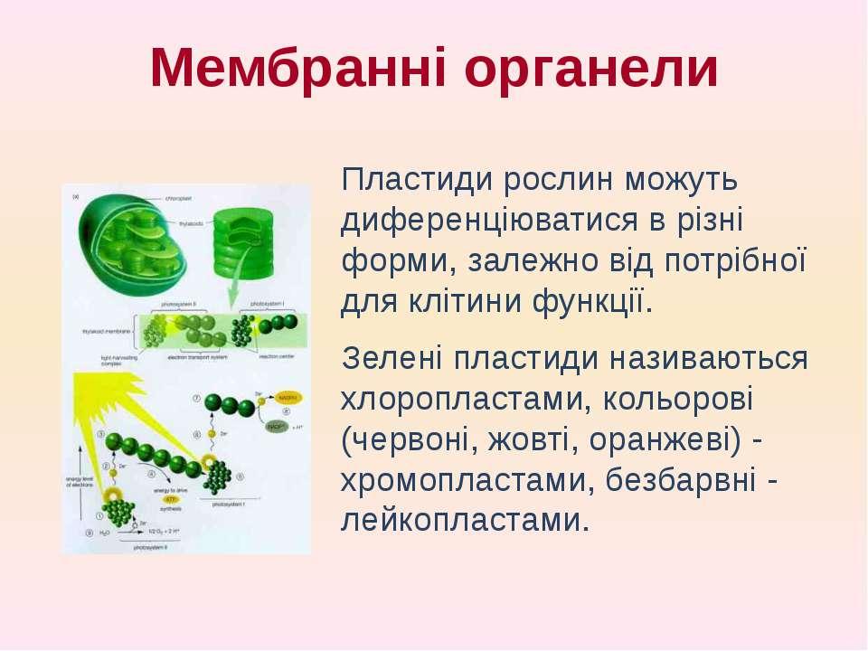 Пластиди рослин можуть диференціюватися в різні форми, залежно від потрібної ...