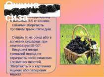 Збирають плоди вручну в маленькі 3-5 кг кошики. Свіжими зберігають протягом т...