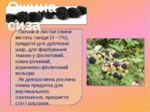 Пагони й листки ожини містять таніди (4 −7%), придатні для дублення шкір, для...