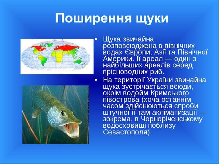 Щука звичайна розповсюджена в північних водах Європи, Азії та Північної Амери...