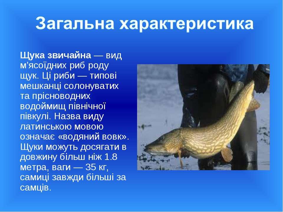 Щука звичайна— вид м'ясоїдних риб роду щук. Ці риби— типові мешканці солону...