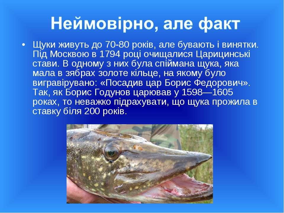 Щуки живуть до 70-80 років, але бувають і винятки. Під Москвою в 1794 році оч...