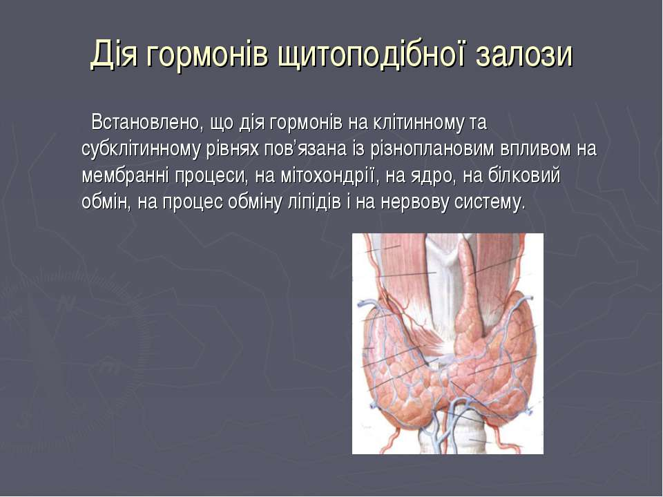 Дія гормонів щитоподібної залози Встановлено, що дія гормонів на клітинному т...